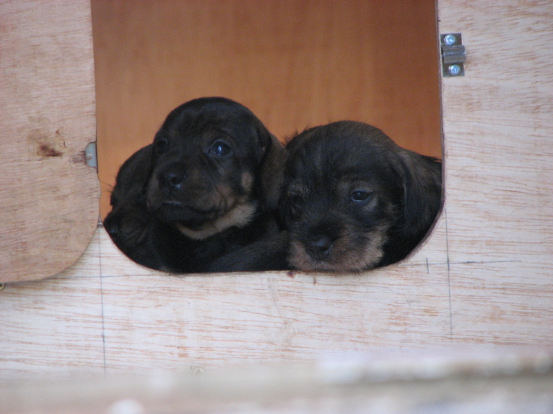 pups at door